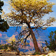 Grand Canyon National Park And Tree Poster
