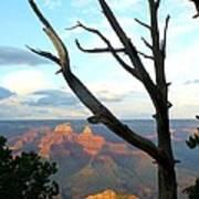 Grand Canyon Tree Poster