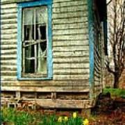 Grandma's Daffodyls Poster by Julie Dant