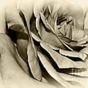 Grandma's Rose Poster