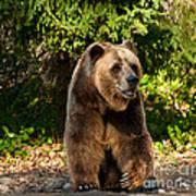 Grandpa Bear Poster