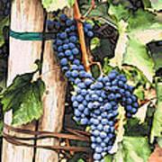 Grapes 1 Poster