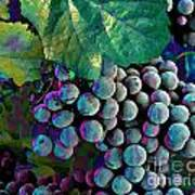 Grapes Painterly Poster