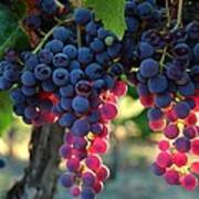 Grapes With Bokeh Poster