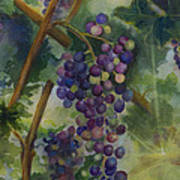 Baby Cabernets II   Triptych Poster