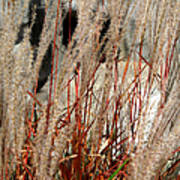 Grass Abstract Poster