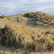 Grass And Sand Dunes Poster