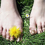 Grass Between My Toes Poster by Stephen Norris