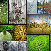 Grass Collage Variety Poster