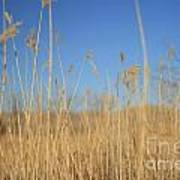 Grass In Motion Poster