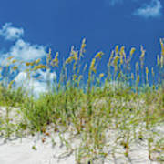Grass On The Beach, Bill Baggs Cape Poster