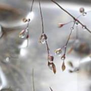 Grasses After A Summer Rain Poster
