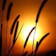 Grasses At Sunset - 1 Poster