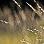 Grasses Blowing Poster