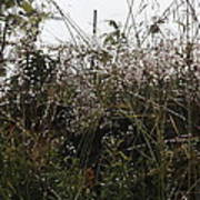 Grasses Glittering With Thousand Of Raindrops Poster