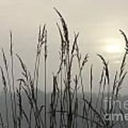 Grasses In Iceblue Landscape Poster