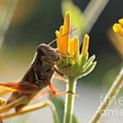 Grasshopper Delight Poster