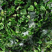 Grassnowcomp 2009 Poster