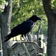 Graveyard Bird On Top Of A Tombstone Poster
