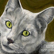 Gray Cat With Green Eyes Poster
