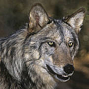Gray Wolf Portrait Endangered Species Wildlife Rescue Poster