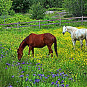 Grazing Amongst The Wildflowers Poster