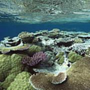 Great Barrier Reef Near Port Douglas Poster