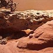 Great Basin Rattlesnake Poster