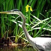 Great Blue Heron By Yellow Flower Poster
