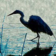 Great Blue Heron Fishing In The Low Lake Waters Poster