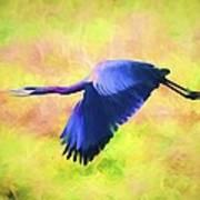 Great Blue Heron In Flight Art Poster