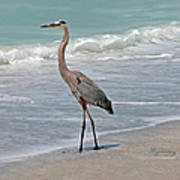 Great Blue Heron On Beach Poster
