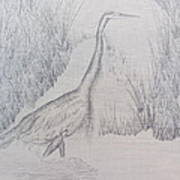 Great Blue Heron Pencil Drawing Poster