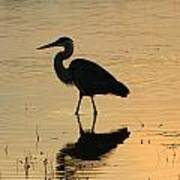 Great Blue Heron Reflected Poster