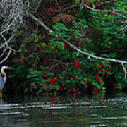 Great Blue Heron Wading Poster by James Hammen