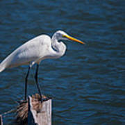 Great Egret At His Post Poster