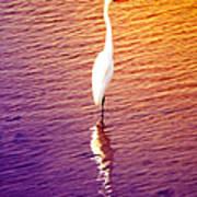 Great Egret At Sundown  Poster