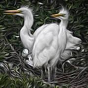 Great Egret Chicks Poster by Hazel Billingsley