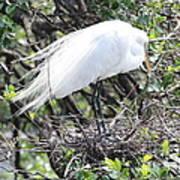 Great Egret On Nest Poster