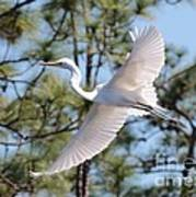 Great Egret Spirit Poster