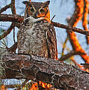 Great Horned Owl At Sunset Poster