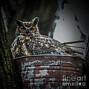 Great Horned Owl On Nest Poster