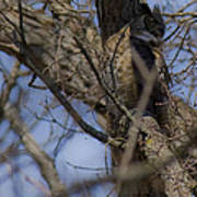 Great Horned Owl On Watch Poster