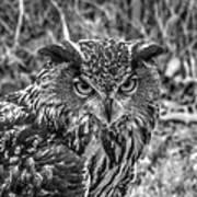 Great Horned Owl V7 Poster