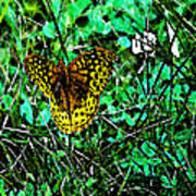 Great Spangled Fritillary Ins 49 Poster