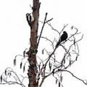 Great Spotted Woodpecker And A Blackbird. Dude What Are You Doing Poster
