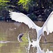 Great White Egret Fishing Sequence 2 Poster