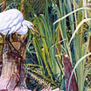 Great White Heron Sanctuary Poster