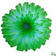 Green And Blue Dahlia Poster