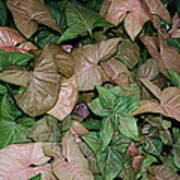 Green And Brown Leaves Poster